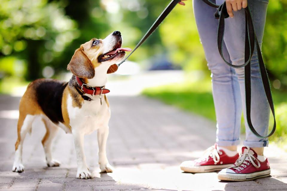 guinzaglio cane
