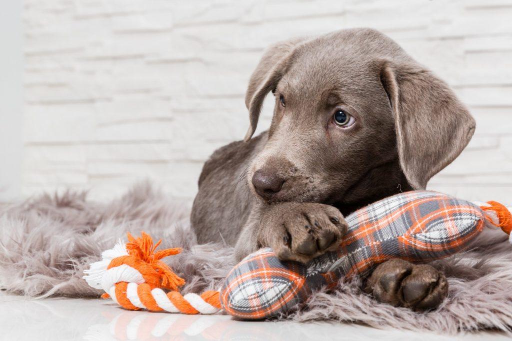 nomi per cani femmina