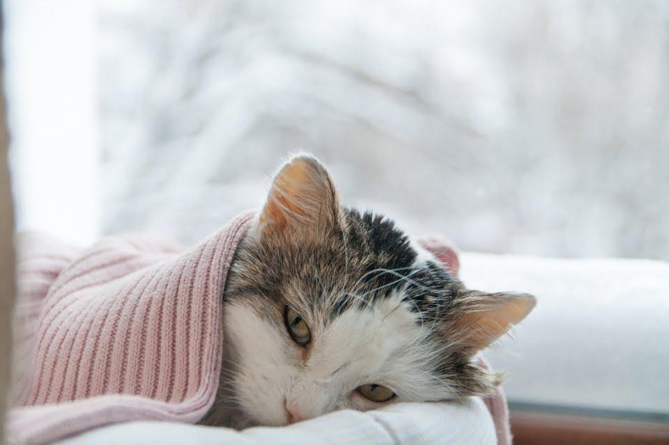 raffreddore nel gatto