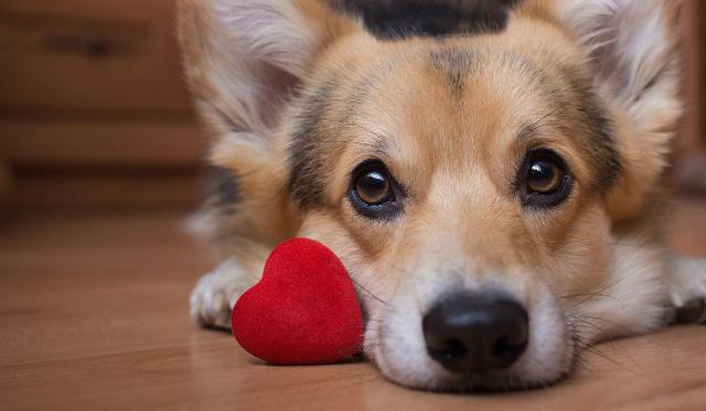frasi d'amore per il cane