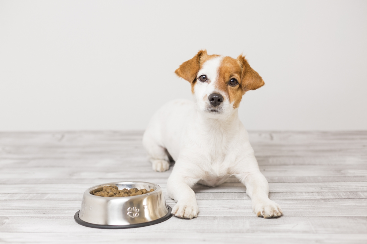 Cane non mangia - cause - terapia