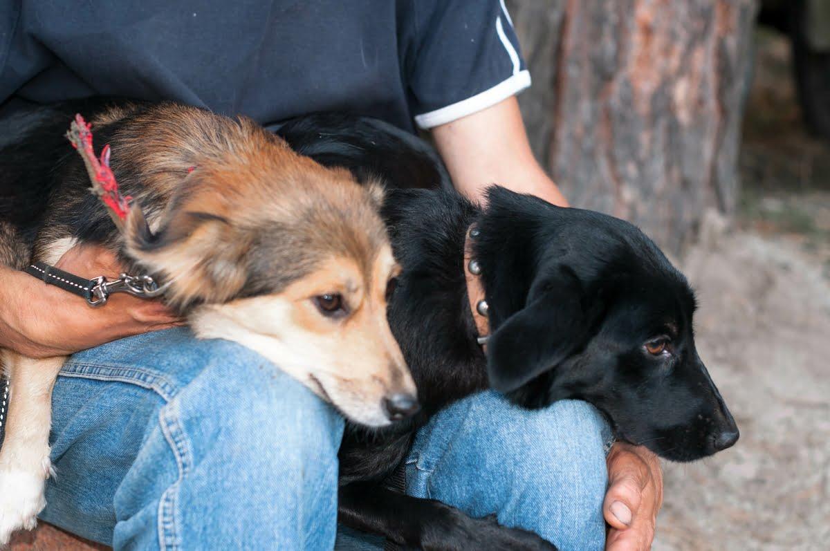 Pensione per cani - Come sceglierla