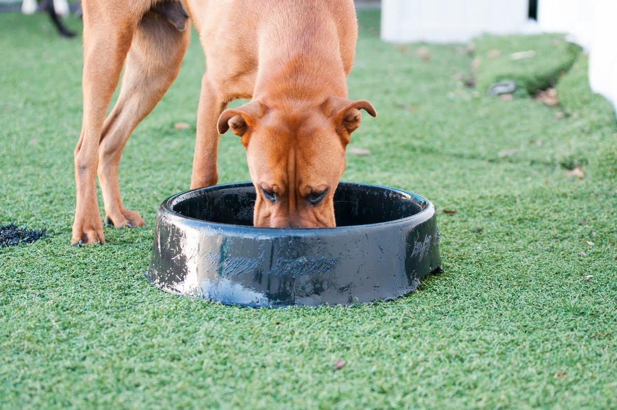 Sindrome di Cushing nel cane