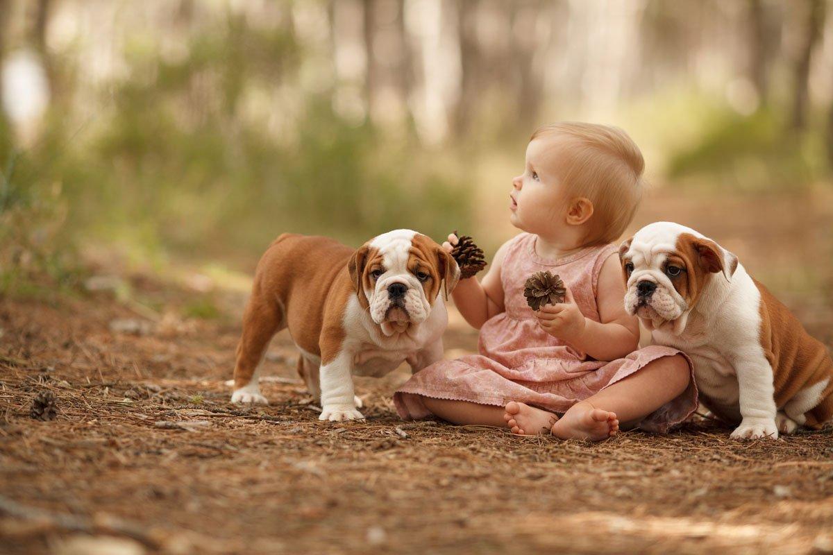 bulldog inglese bambini