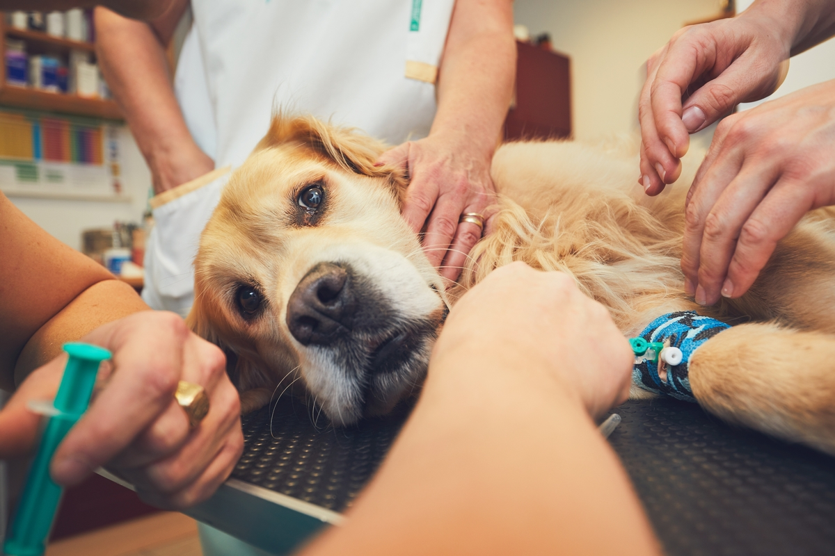 Emangiosarcoma cane