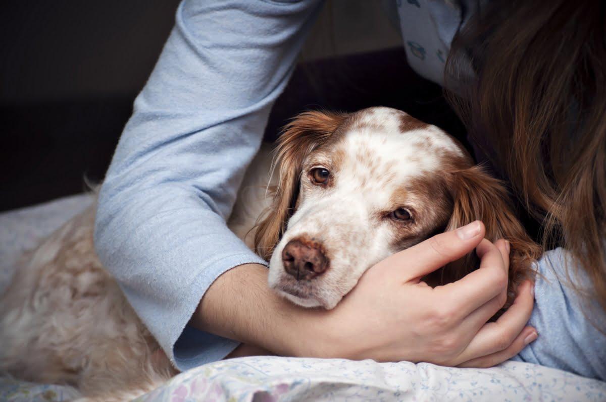 emangiosarcoma nel cane - sopravvivenza