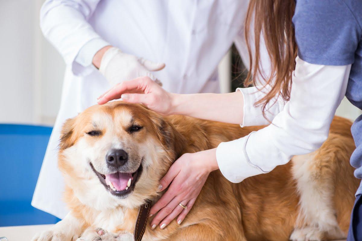 Lipoma nel cane - Cause - Diagnosi - Terapia