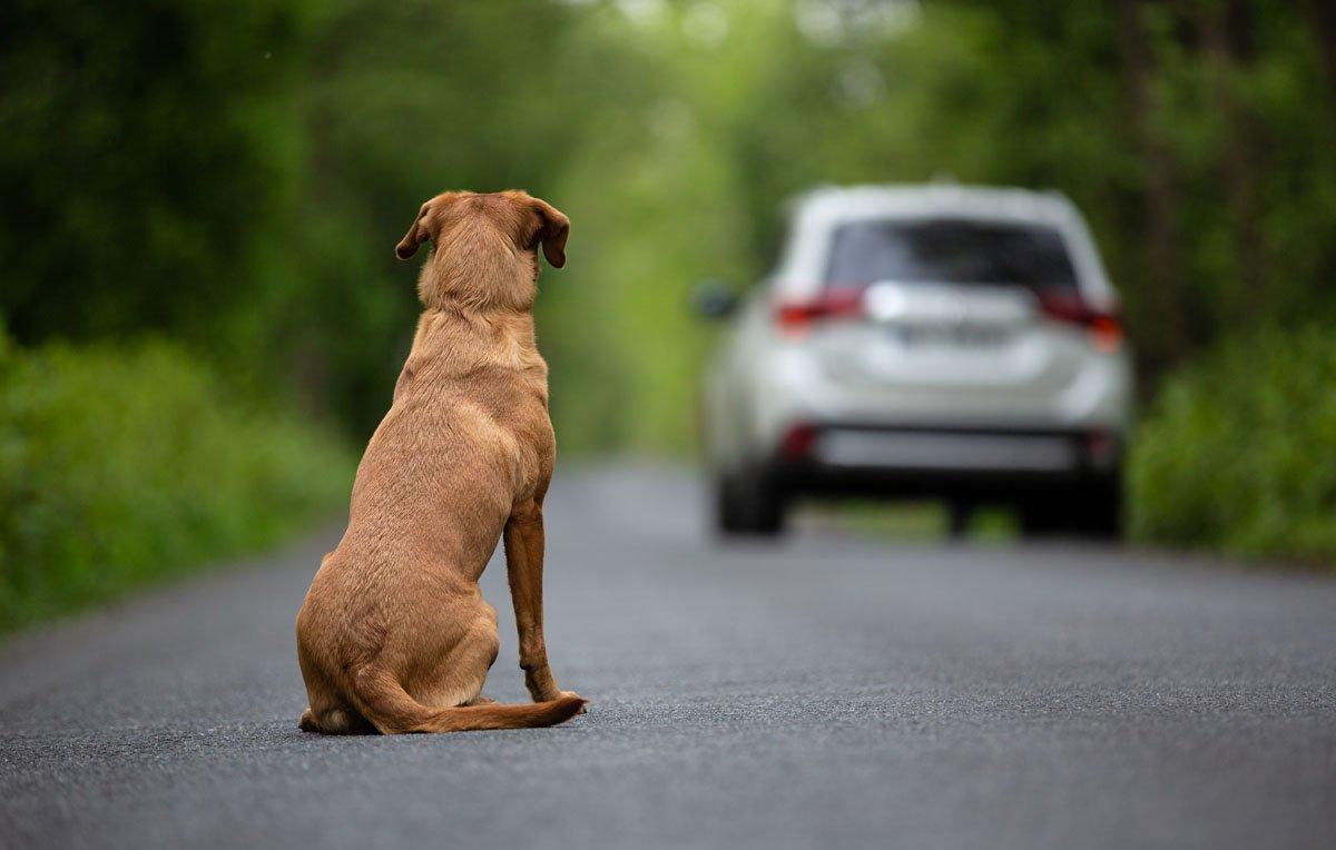 abbandono dei cani
