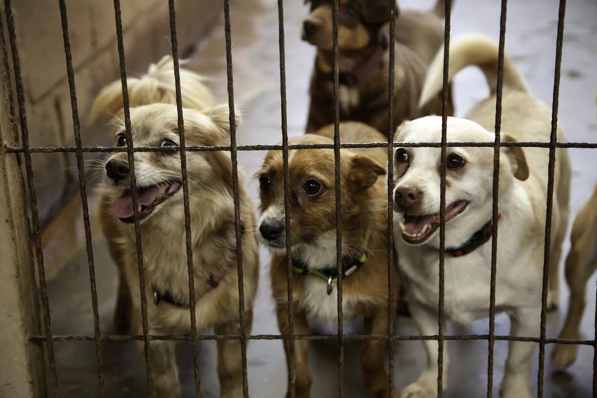 Adottare un cane dal canile