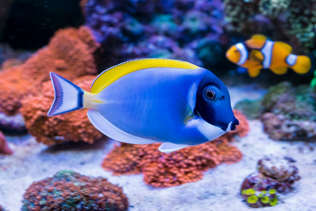 Allestimento di un acquario