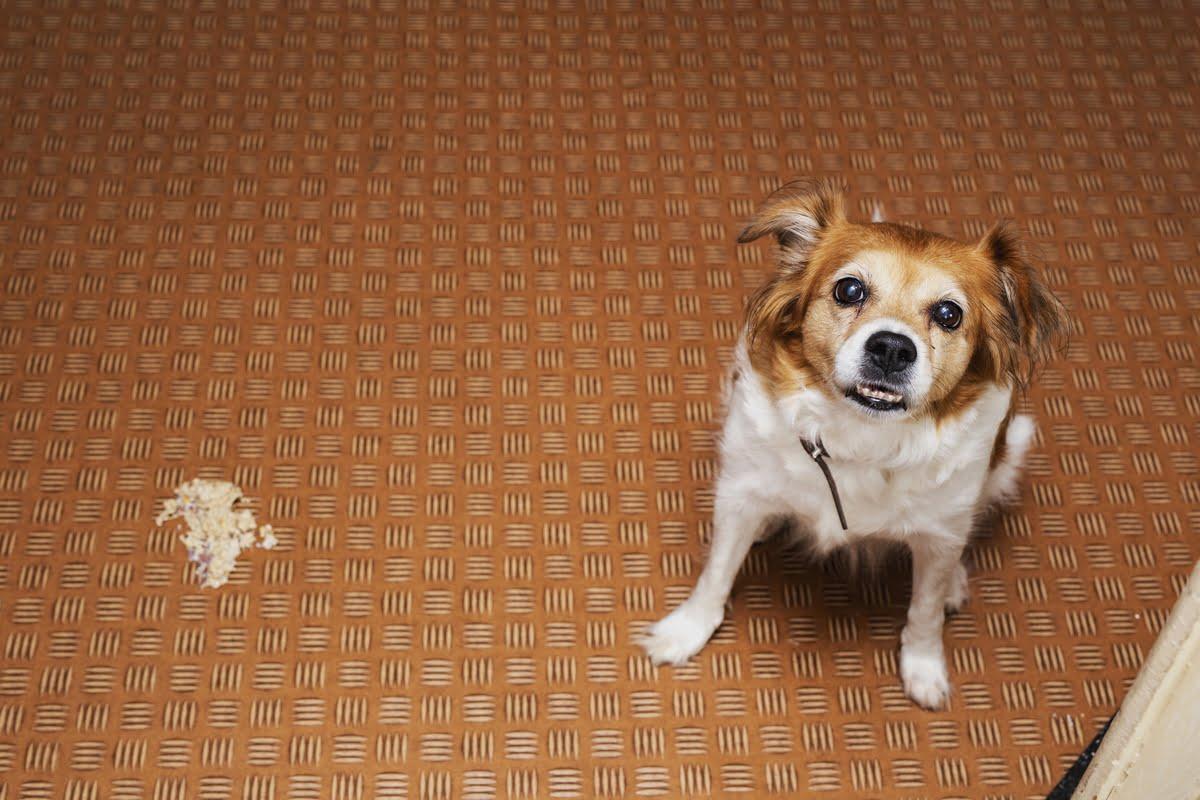 Coccidiosi nel cane
