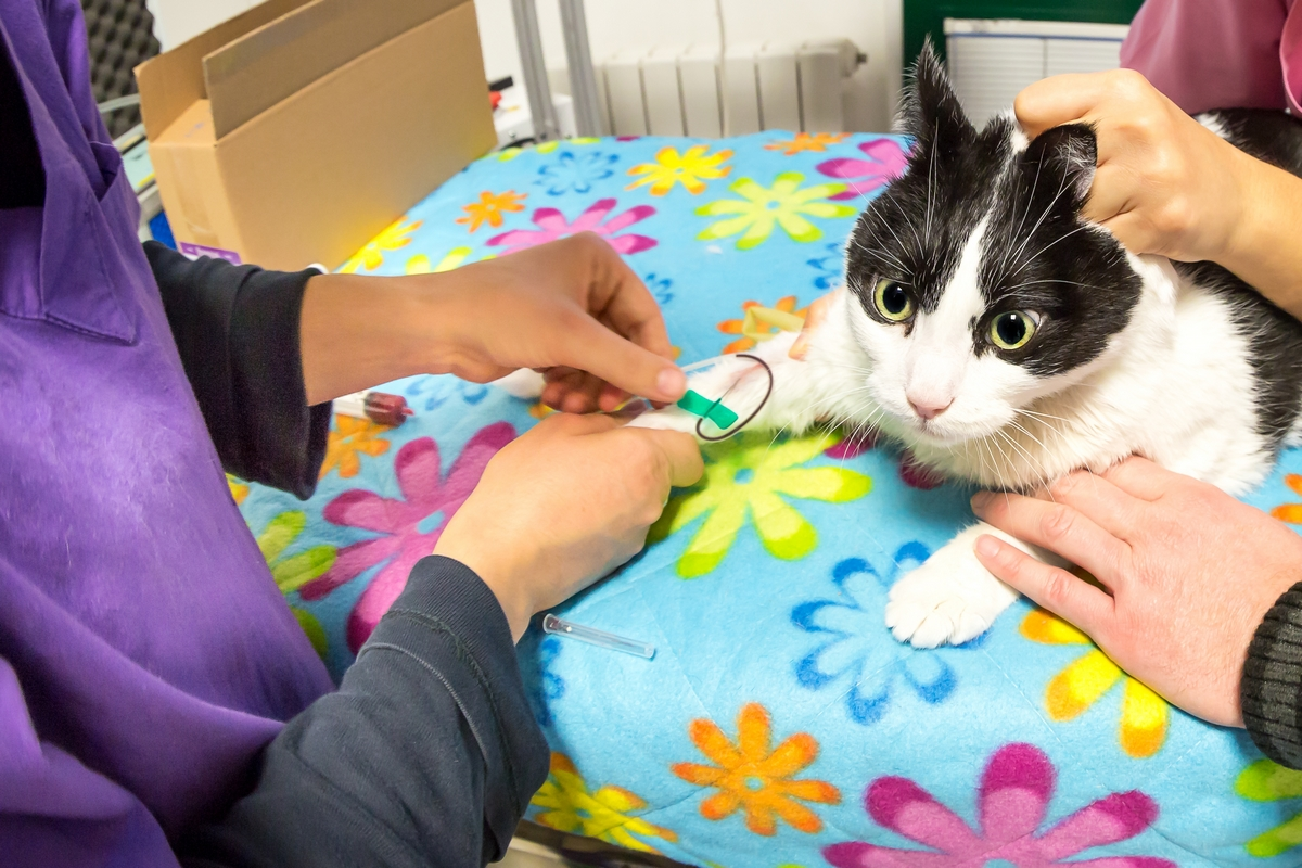 Leucemia felina (FeLV)