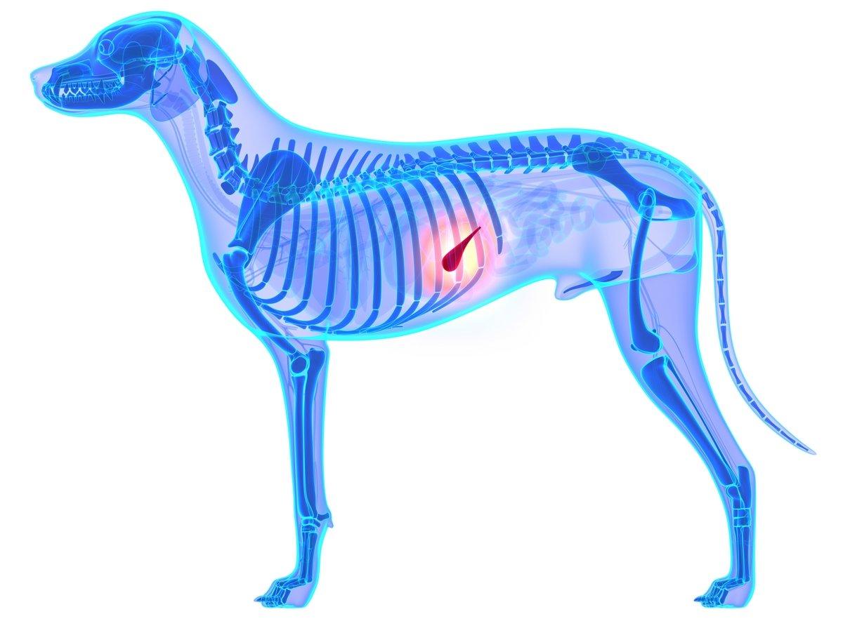pancreatite nel cane