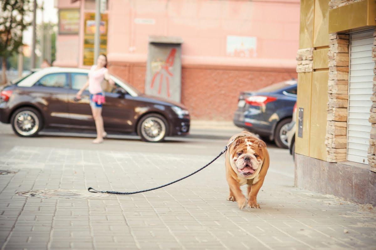 Smarrimento del cane