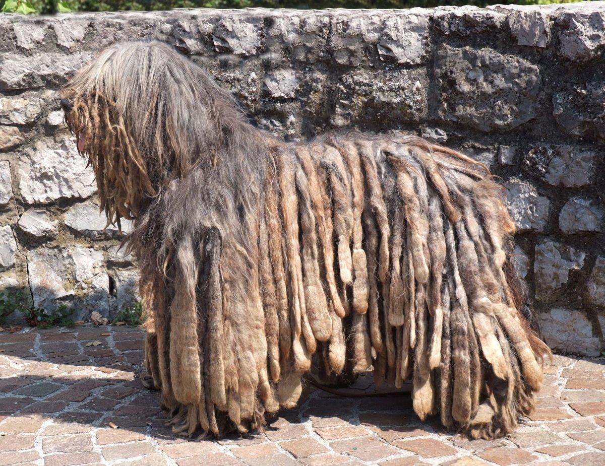 cane da pastore bergamasco