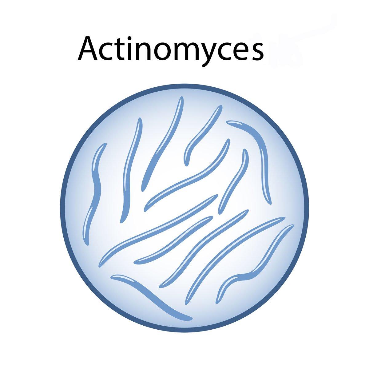 actinomicosi nel cane