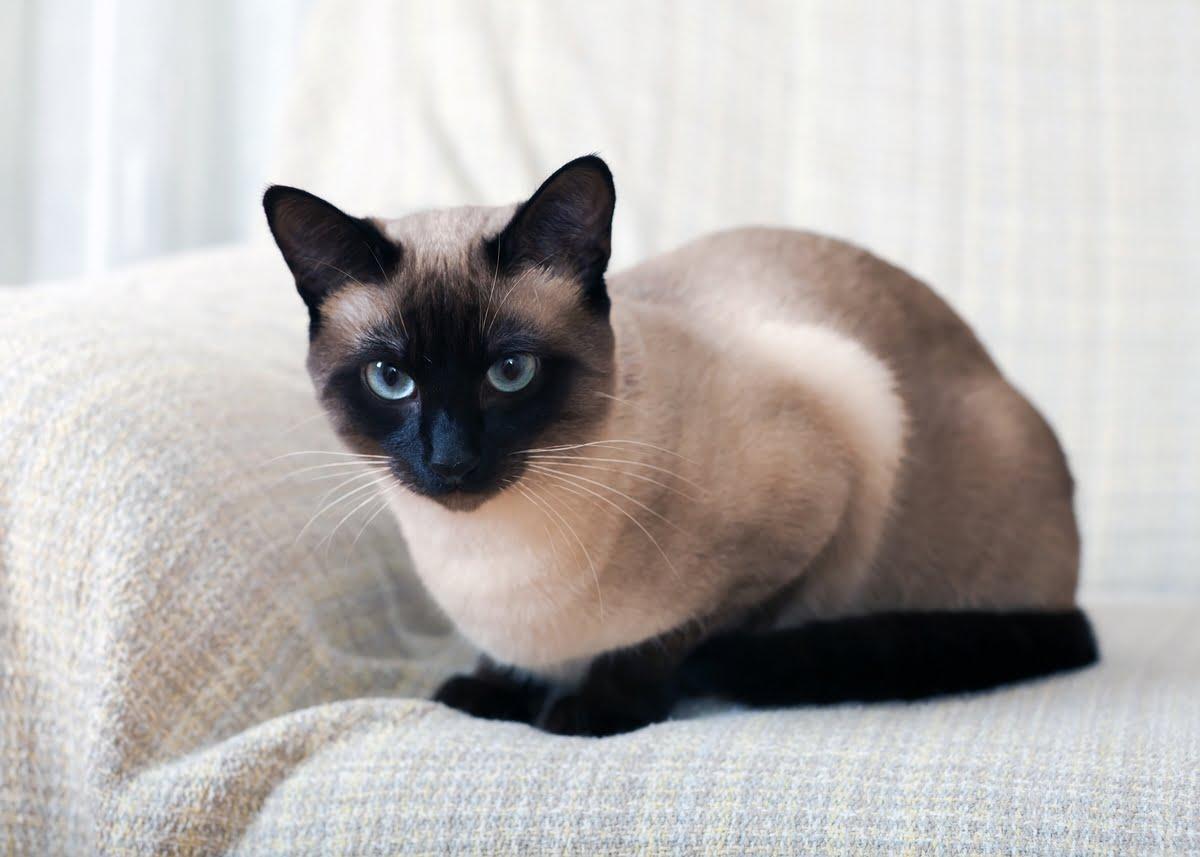 Linfoma gatto - Sintomi
