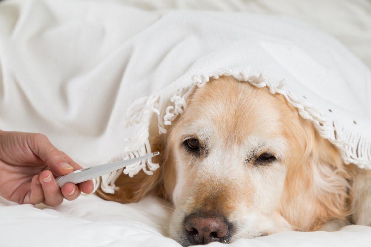 raffreddore nel cane